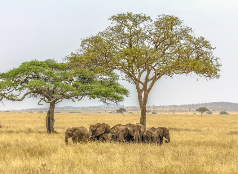 Serengeti, Arusha, Tanzania – 14:03; 25 September, 2015 Canon EOS 60D Canon EF-S 18-55mm f/3.5-5.6 IS