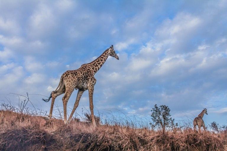 Ngorongoro, Arusha, Tanzania – 15:06; 28 September, 2015 Canon EOS 60D Canon EF-S 18-55mm f/3.5-5.6 IS
